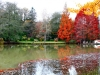 2995920-ataturk-arboretumu