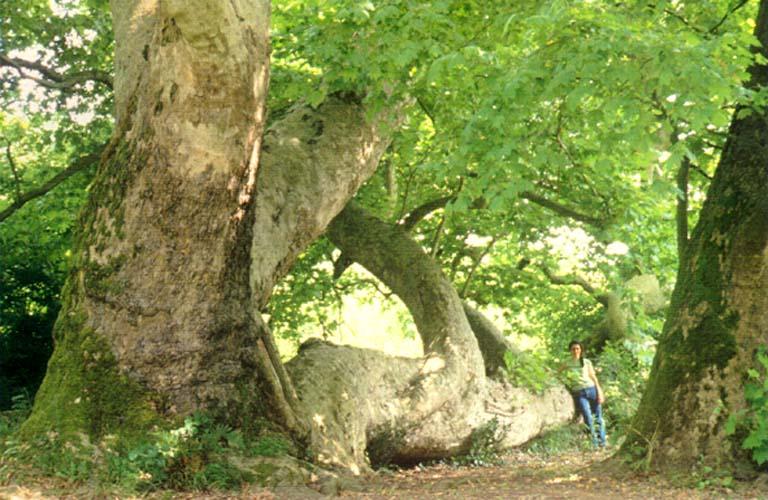 belgrad ormanı fotoğrafları tatil rehberi tatilpanosunet