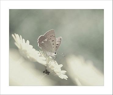 tatil-kelebek