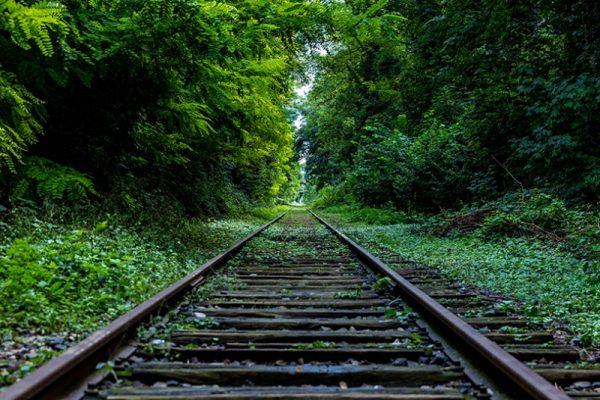 tren-yolu-orman-2