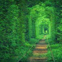 Ormandan Geçen Tren Yolları