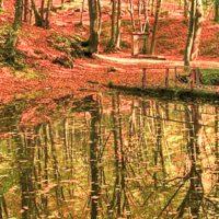 Belgrad Ormanı Fotoğrafları